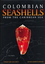 Colombian Seashells from the Caribbean Sea